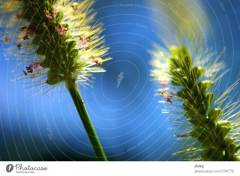 Schräg Natur grün blau Pflanze Sommer Leben Wiese springen Blüte Gras Frühling Wind Wachstum Blühend Stengel Halm