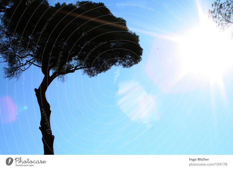Italien bei 30 °C Himmel Baum Sonne Sommer Strand Europa Amerika Palme blenden Lichtstrahl Ausland Neapel