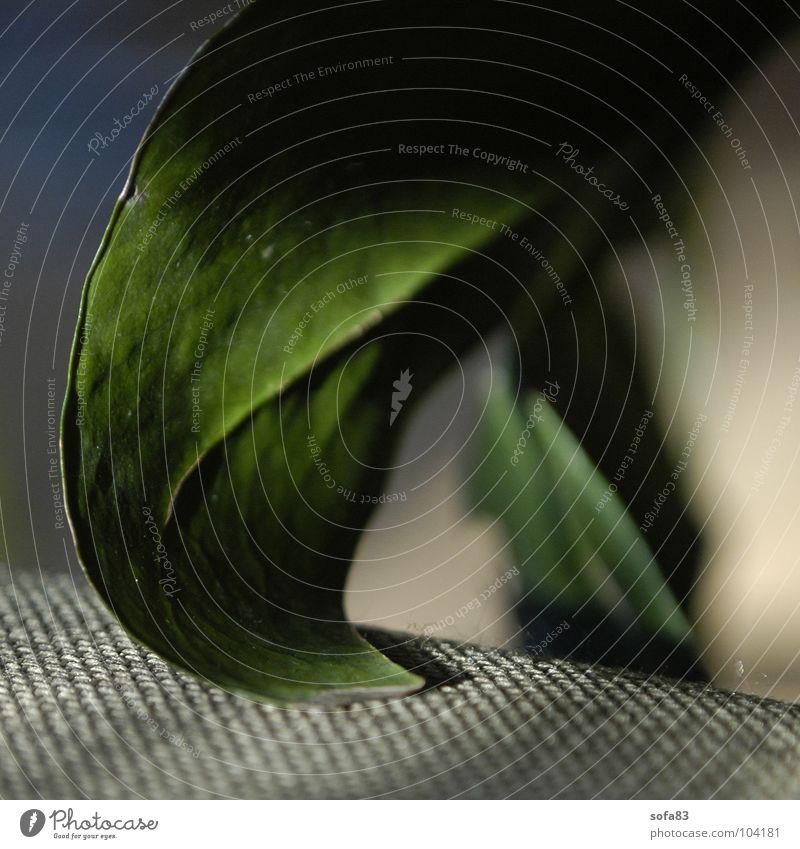 haustierersatz1 grün blau Pflanze Blatt Freizeit & Hobby Dekoration & Verzierung Häusliches Leben Gefäße Zimmerpflanze Lichtfleck Fensterblätter