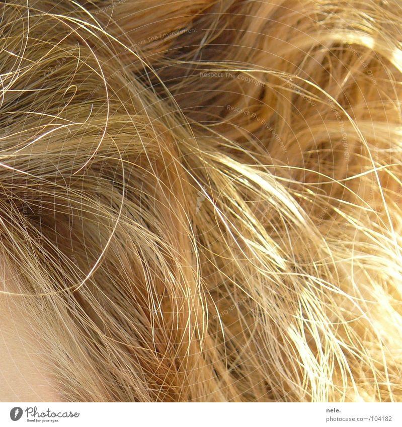 blond jette Frau Natur Sommer Haare & Frisuren Kraft liegen Wildtier weich Locken Stirn Haarsträhne zerzaust kraus Haarspliss