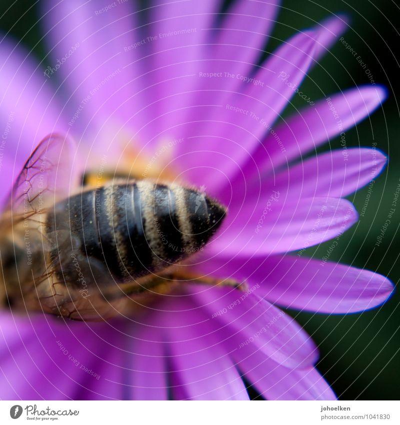 Po Natur Pflanze Blume Tier Blüte fliegen rosa Park Wildtier Sex Blühend Duft Biene krabbeln Nutztier ansammeln