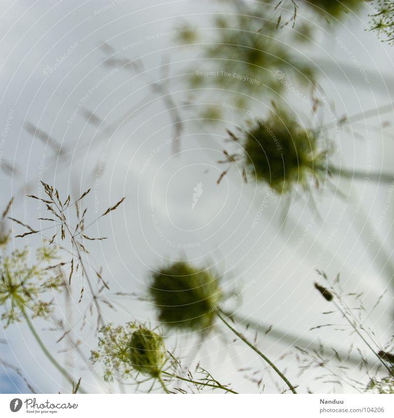 grün vor weiß Himmel Blume Wolken Herbst Wiese Gras Samen bedecken Grünpflanze schlechtes Wetter