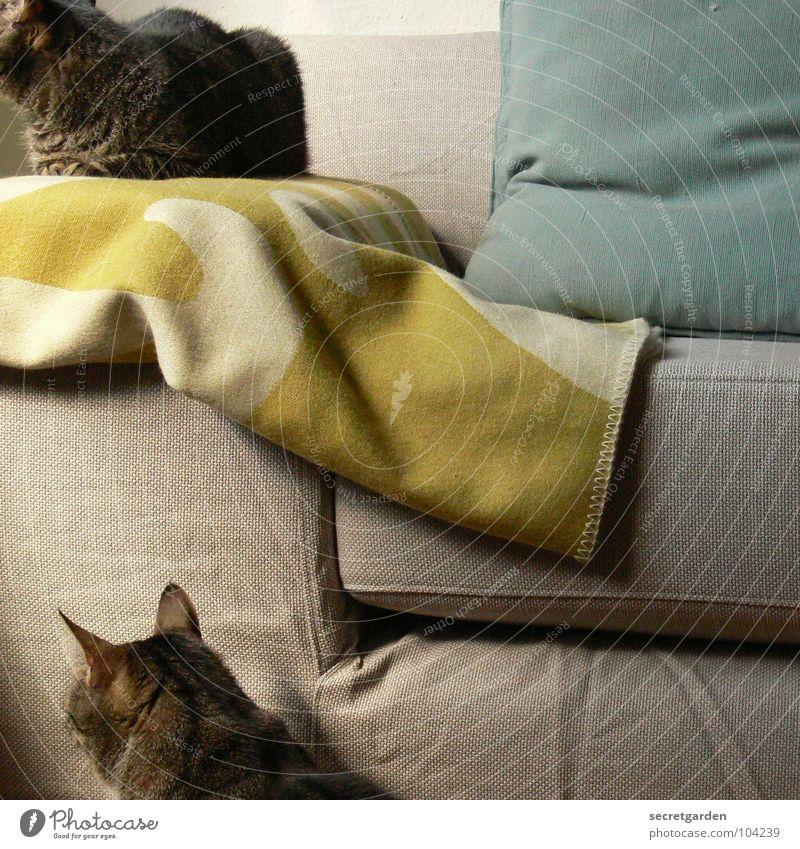 in eine richtung Sofa Katze hängen gestreift Stoff grün giftgrün Wolle Physik deckend kuschlig Kuscheln grau gemütlich lümmeln Fernsehen Material Wohnzimmer