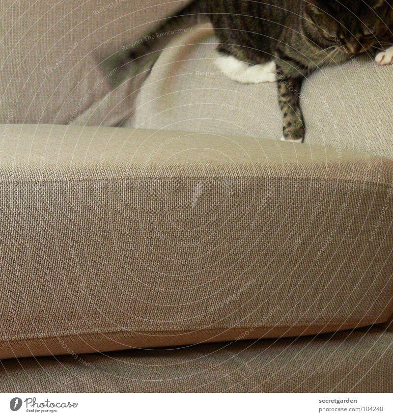 die 5 minuten haben Sofa Katze kuschlig süß hängen Spielen Ausgelassenheit durchdrehen Stoff grau gemütlich Fernsehen Material Wohnzimmer Möbel ruhig Erholung