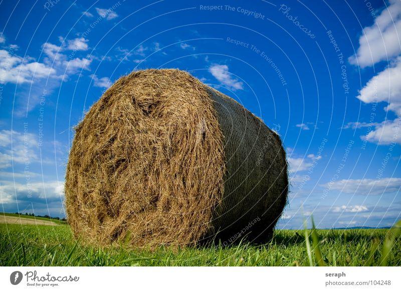 Strohballen Himmel Natur Sommer Landschaft Wolken Wiese Gras Horizont Feld Landwirtschaft Getreide Ernte Korn Halm Rolle