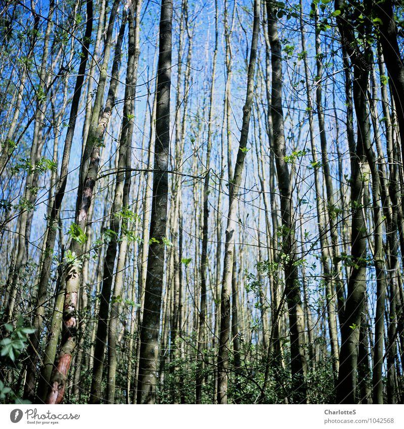 So Straight Landwirtschaft Forstwirtschaft Natur Landschaft Himmel Wolkenloser Himmel Frühling Sommer Schönes Wetter Baum Gras Sträucher Moos Feld Wald Urwald