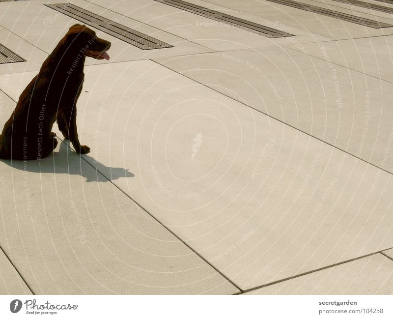 auf den hund gekommen weiß Sommer Tier Erholung Hund hell braun Raum warten Beton Platz modern Pause Verkehrswege Müdigkeit