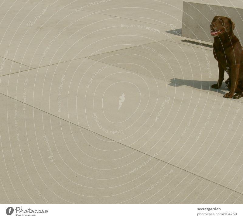 neben den hund gekommen Beton weiß Plattenbau Pause Erholung Müdigkeit Hund Tier braun Erwartung Sommer Platz Raum Verkehrswege Erschöpfung warten kein herrchen