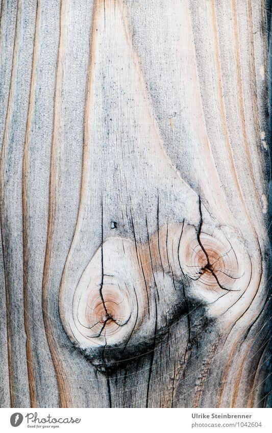 Holzart 3 Nutzpflanze Haus Mauer Wand Fassade atmen einzigartig nachhaltig natürlich Schutz ästhetisch Design Energie Natur Maserung Holzstruktur Linie Astloch