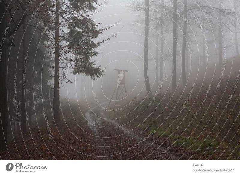 schlechte Aussichten Natur Wald Herbst Wege & Pfade Nebel nass Jagd Kurve trüb Hochsitz