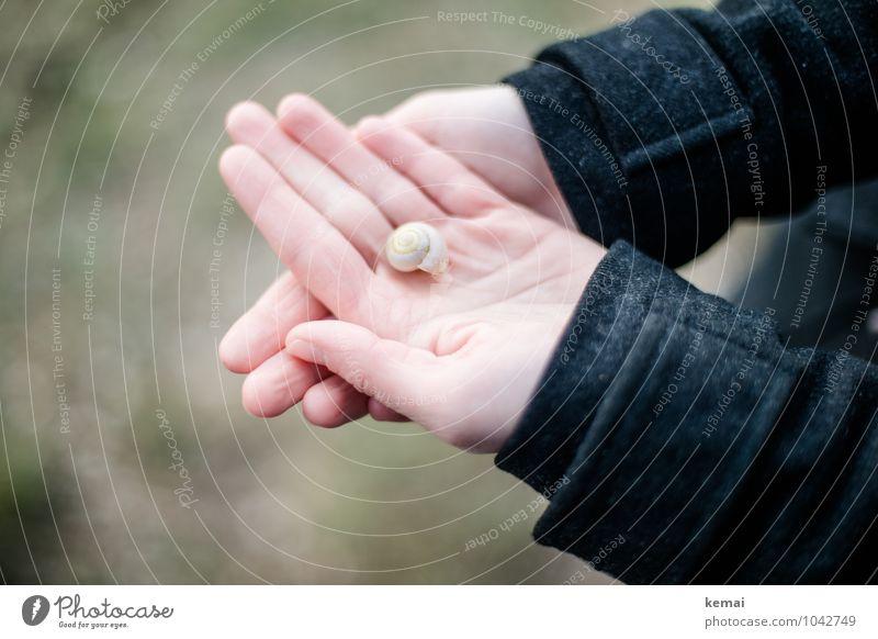 All the small things (5) Lifestyle Leben Hand Finger Handfläche 1 Mensch Mantel Schneckenhaus festhalten klein niedlich schön schwarz Zufriedenheit ruhig zeigen