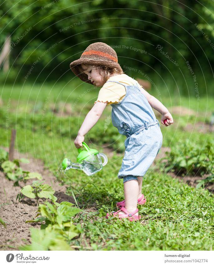 Kleines Mädchen gießt Pflanzen Gemüse Sommer Garten Kind Gartenarbeit Kleinkind Feld Hut Gießkanne Arbeit & Erwerbstätigkeit Erholung Gesundheit hell grün Glück
