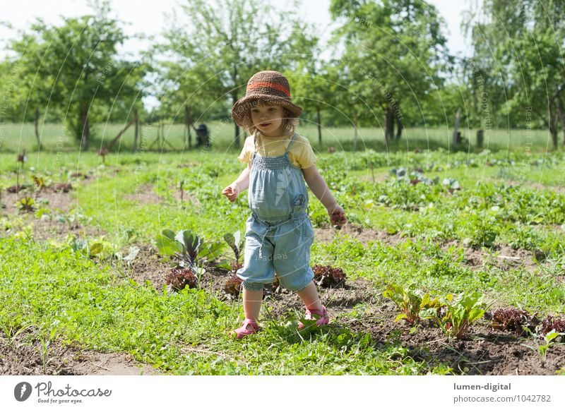 Mädchen im Feld Kind Sommer Baum Freude lachen Garten Kindheit Gemüse Ernte Hut Kleinkind Beet Gartenarbeit Landleben