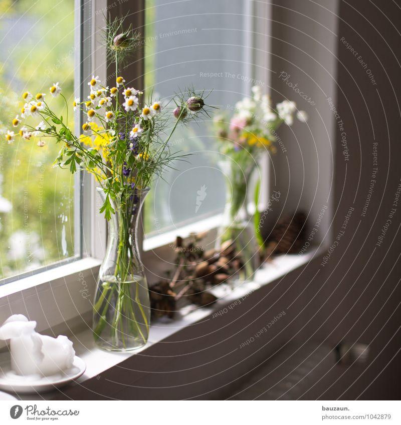 mit blumen. Pflanze Blume Freude Fenster Blüte Stil Glück Feste & Feiern Garten Zufriedenheit Häusliches Leben Dekoration & Verzierung elegant Geburtstag