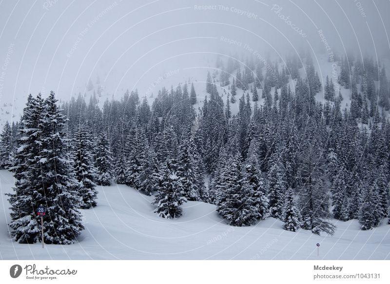 Winterliche Schönheit Umwelt Natur Landschaft Pflanze Wetter schlechtes Wetter Nebel Eis Frost Schnee Schneefall Baum Berge u. Gebirge kalt natürlich grau rot