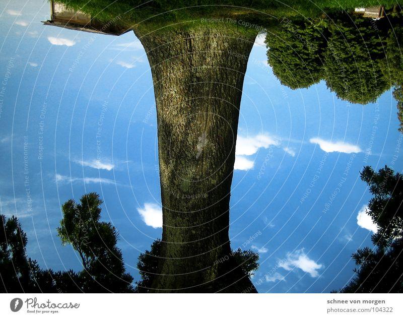 konfus Himmel Baum blau Sommer Freude Haus Wolken Gras Sträucher Idylle drehen falsch Kopfstand Blühende Landschaften