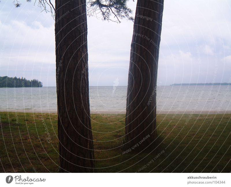 Bäume und Mee(h)r Wasser Baum Meer Wiese See Nebel Abenddämmerung schlechtes Wetter