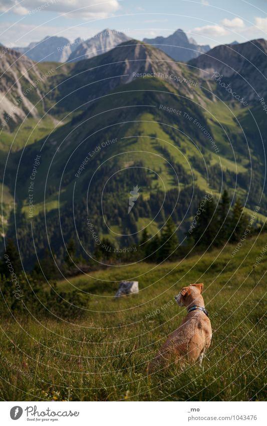 Unterwegs Ausflug Abenteuer Freiheit Berge u. Gebirge wandern Natur Landschaft Sommer Hügel Felsen Alpen Gipfel Tier Haustier Hund 1 sitzen Ferne Unendlichkeit