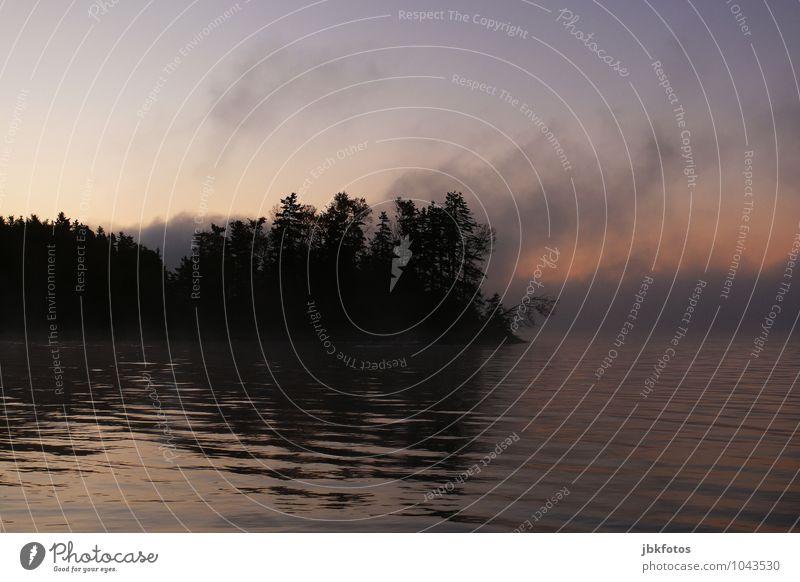 Küstennebel Umwelt Natur Landschaft Pflanze Urelemente Himmel Sonnenaufgang Sonnenuntergang Frühling Herbst Klima Schönes Wetter Nebel Baum Wald Wellen Seeufer