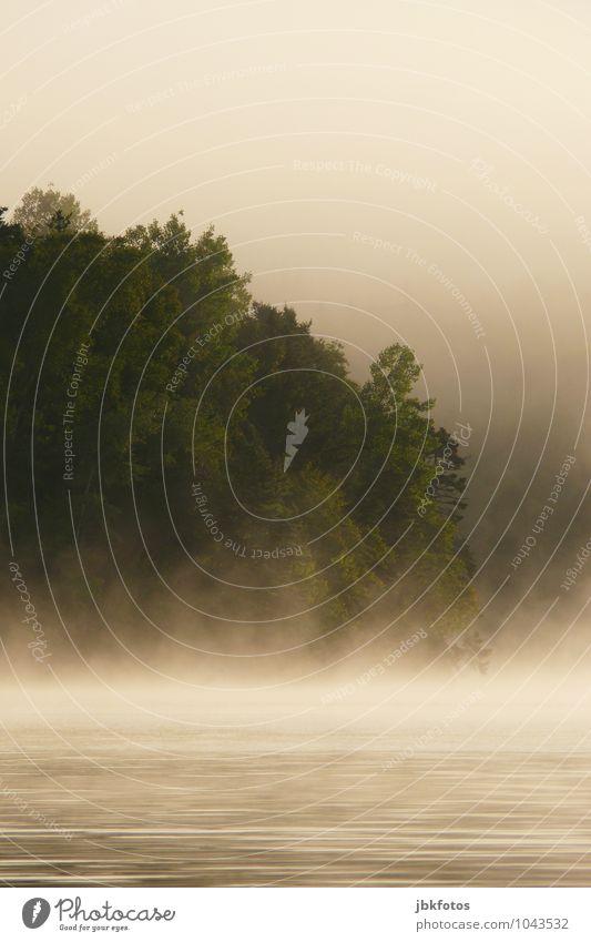 Morgennebel Himmel Natur Pflanze Baum Landschaft Wolken Umwelt Bewegung Horizont glänzend Wetter leuchten Nebel Klima Schönes Wetter berühren