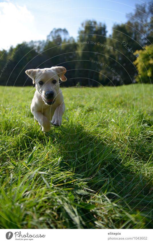 Tierisch Hund Natur grün Sommer Erholung Herbst Wiese Gras natürlich Fröhlichkeit Lebensfreude Schönes Wetter rennen Jagd Haustier