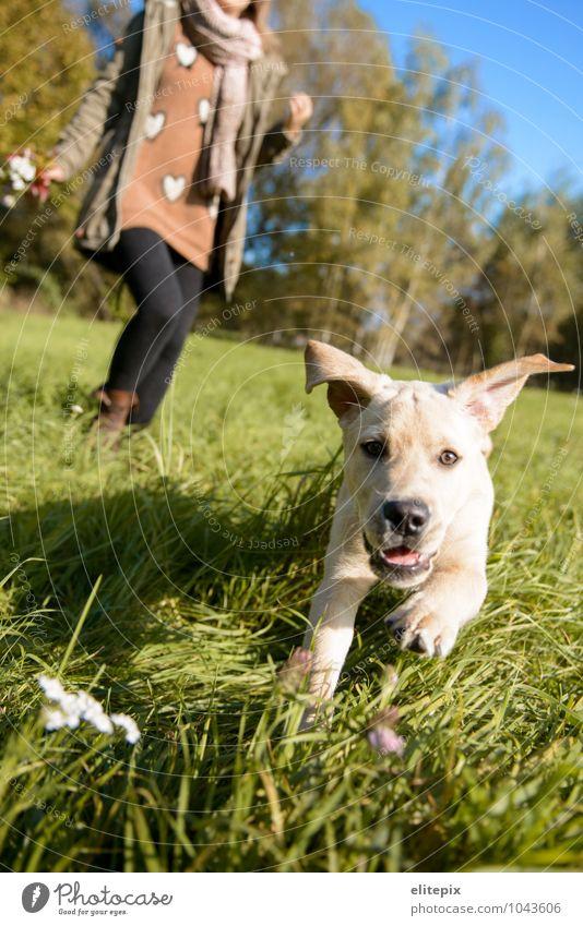 Tierischer Herbst feminin Junge Frau Jugendliche Erwachsene 1 Mensch 18-30 Jahre Natur Schönes Wetter Gras Park Wiese Haustier Hund Tiergesicht genießen Jagd