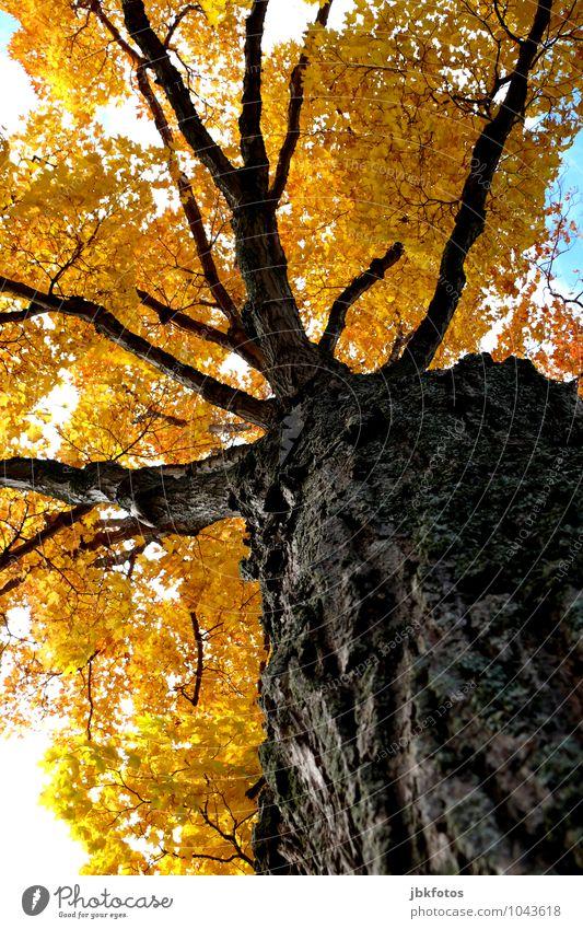 colourful giant Natur Sommer Sonne Baum Freude Umwelt gelb Wärme Glück Garten Stimmung Park Kraft Klima Schönes Wetter Sicherheit