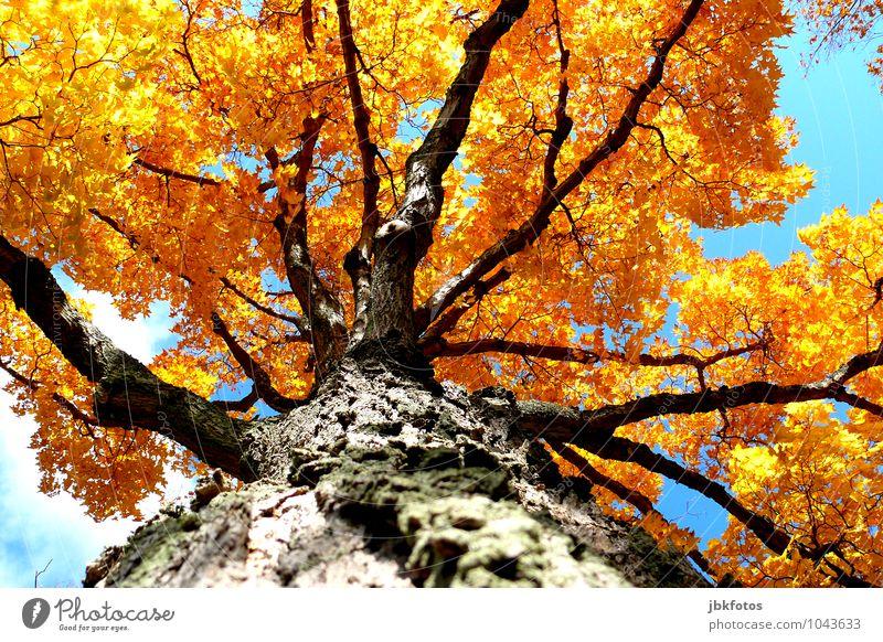 Farbenfreude Himmel Natur Pflanze schön Sommer Sonne Baum Wald Umwelt gelb Wärme Herbst Gesundheit Garten Park orange
