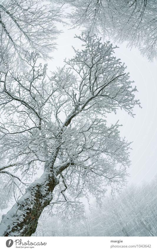 Filigraner Baum Himmel Natur Pflanze weiß Wasser Baum ruhig Tier Winter Wald Umwelt Schnee Tod Schneefall Eis Wetter