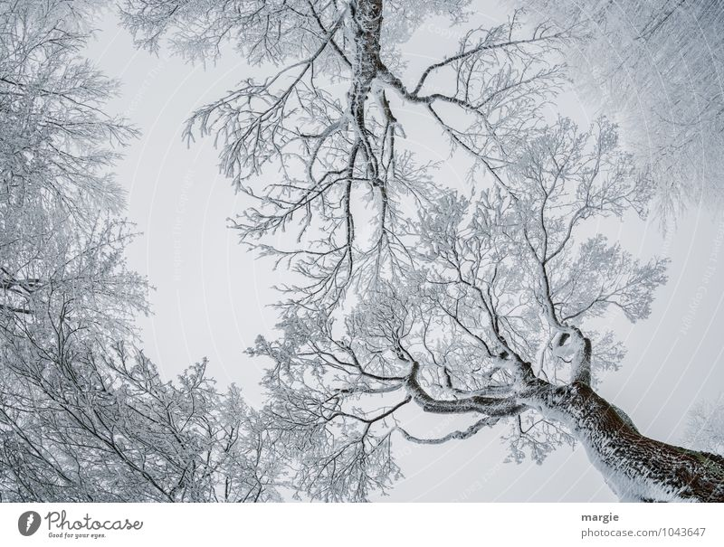 Filigrane Kunstwerke Himmel Natur weiß Baum Winter Wald Umwelt Senior Schnee Liebe Zusammensein Schneefall Eis Wetter Wachstum Kraft