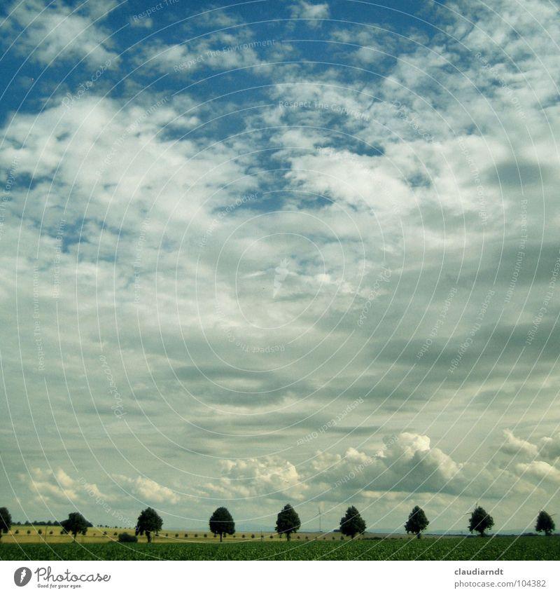 Weitblick Allee Baum Baumreihe Horizont Wolken Feld Landwirtschaft Symmetrie Genauigkeit Glätte ruhig Aussicht Wende Jahreszeiten Sommer Ebene Reihe Himmel