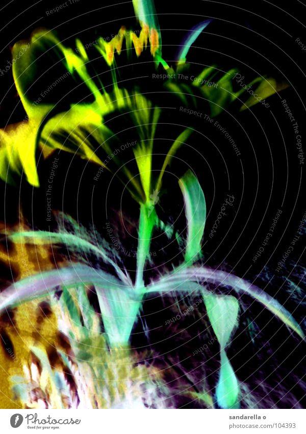 manaus Blume grün blau Farbe Blüte Surrealismus digital Lilien Digitalfotografie Blütenblatt negativ