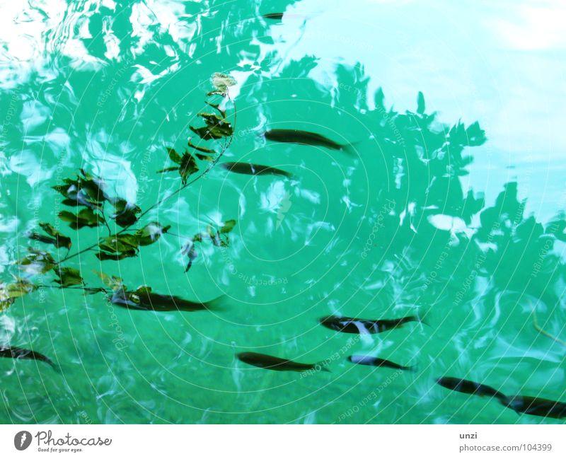 feucht und fröhlich tief grün Blatt Halm Tier ruhig Einsamkeit Schwerelosigkeit türkis rein Sauberkeit Gras Elektrizität blau grünlich bläuchlich Fisch Natur
