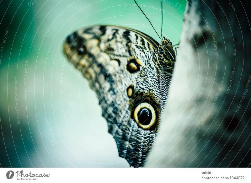 Butterfly Natur Tier Pflanze Baum Baumrinde Baumstamm Schmetterling Flügel Fühler Bananenfalter 1 sitzen ästhetisch elegant nah Makroaufnahme Nahaufnahme
