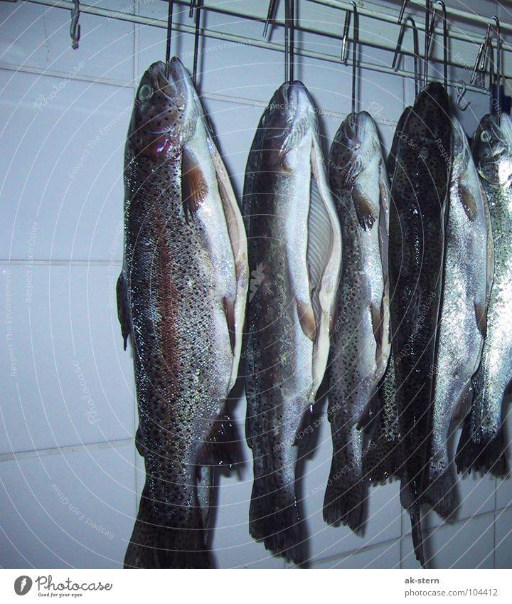 Forellen Katze Wasser Tier kalt Traurigkeit Tod Lebensmittel Zusammensein warten frisch Ernährung Kochen & Garen & Backen Fisch Trauer lecker