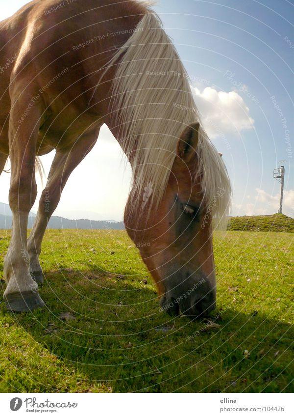 bon appétit Farbfoto Außenaufnahme Menschenleer Textfreiraum unten Tag Schatten Sonnenlicht Starke Tiefenschärfe Zentralperspektive Tierporträt Ernährung Reiten