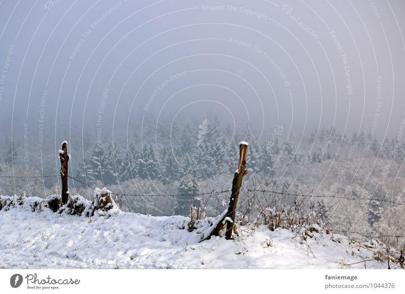 Schneespaziergang II Natur Landschaft Winter Nebel Eis Frost Wald Hügel kalt schön blau grau weiß Winterspaziergang Pfosten Zaun Zaunpfahl Nadelwald Tanne Weide