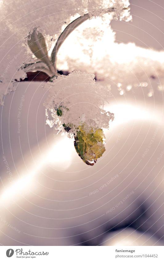 frostig Natur Pflanze schön grün weiß Wasser Blatt Umwelt Schnee rosa glänzend Schneefall Feld Sträucher frisch Wassertropfen