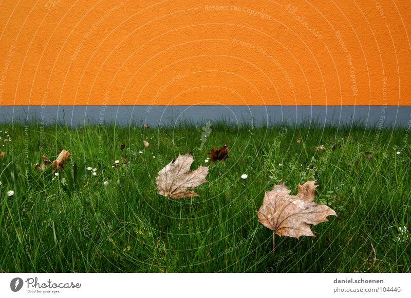 er steht vor der Tür grün Blatt gelb Farbe Herbst Wiese Wand Gras grau braun orange Hintergrundbild Horizont Fassade Wachstum Vergänglichkeit