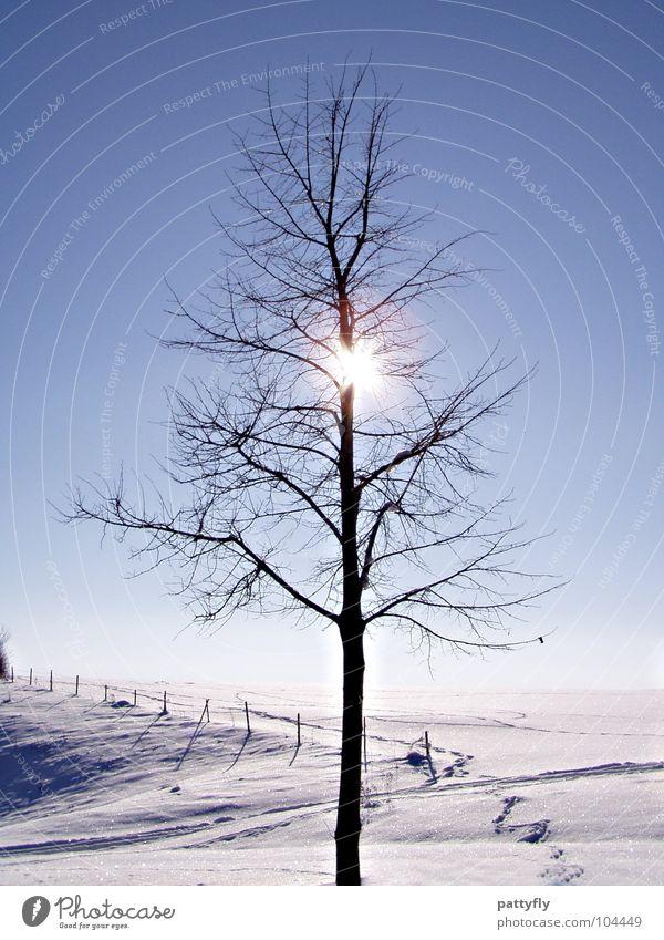 versteckt... Himmel Baum Sonne Winter kalt Schnee Frost frieren