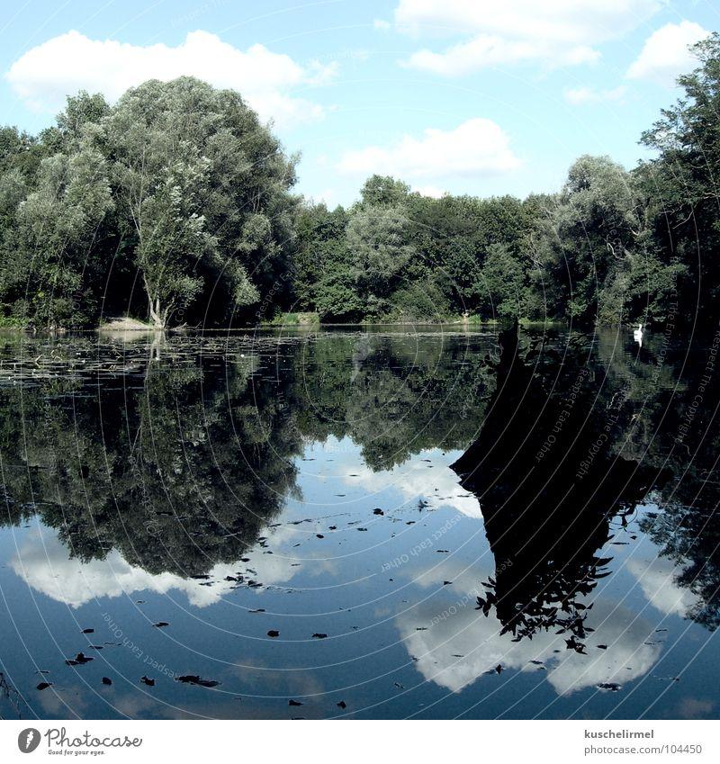 Seelenruhe Wolken Wald Schwan ruhig Baumstumpf grün weiß Gelassenheit Erholung träumen Traumland Ferien & Urlaub & Reisen Wochenende Karlsruhe Freizeit & Hobby