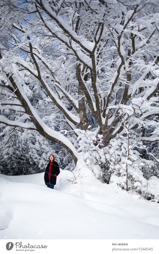 Mensch Frau Jugendliche Pflanze schön Baum Junge Frau Mädchen 18-30 Jahre Winter Wald Erwachsene Schnee stehen beobachten Abenteuer