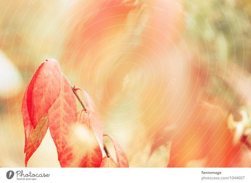 Erinnerung an den Herbst Umwelt Natur Feuer Wind Sträucher Feld Wald schön Glück Optimismus Wärme orange rot Unschärfe herbstlich hellgrün Pastellton Blatt