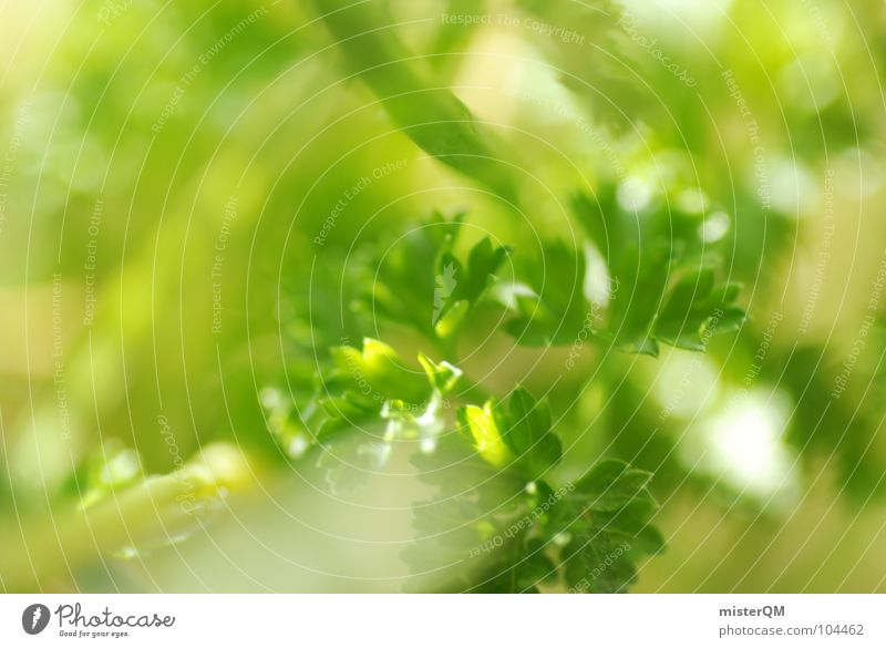 Küchenmen's Friend Petersilie Kräuter & Gewürze grün Grünpflanze Gesundheit aromatisch Makroaufnahme Tiefenschärfe Geschmackssinn Futter Meerschweinchen lecker