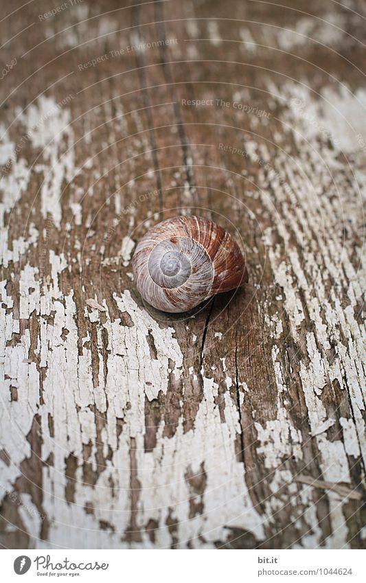 Hüttengaudi | Platz ist in der kleinsten Hütte... Natur Ferien & Urlaub & Reisen Sommer Erholung Einsamkeit ruhig Tier Haus Strand Holz Zeit Garten Lifestyle