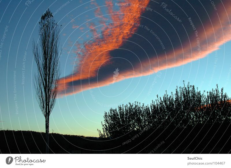 pink-sky-line Wolken Himmel rosa Linie fantastisch dunkel schön Denken Unendlichkeit bezaubernd Abend Ausdauer Neuanfang Kunst Außenaufnahme Langzeitbelichtung