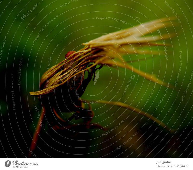 Wiese Natur Blume grün Pflanze Sommer Farbe Herbst Tod Blüte Umwelt Ende Vergänglichkeit Samen verblüht getrocknet