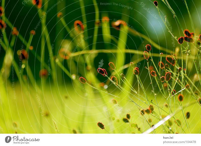 Rot Grün Pflanze Blume Gras Blüte Wiese Feld Zusammensein grün rot Halm verstrickt Keine Ahnung was das ist Farbfoto Außenaufnahme Menschenleer Tag