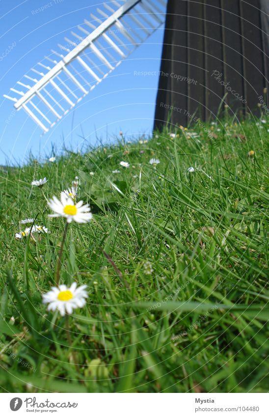 der Wind, der Wind Natur Himmel weiß Blume grün Wiese Gras Gebäude Flügel Hügel historisch Windmühle Mühle