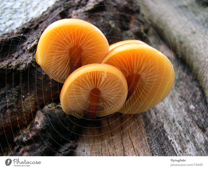 Mushroom Impressions Natur Baum Pilz Lamelle Eiche Buche Sporen Samen